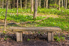 Simple wooden bench in the forest Stock Photos