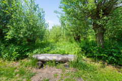 Simple wooden bench in the wood Royalty Free Stock Images