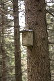 Birdhouse in the woods Royalty Free Stock Image