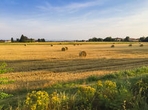 Simplement rural photo stock