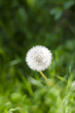 Simplicidad del `s de la naturaleza Fotografía de archivo libre de regalías