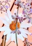 Simplicidad floral imagen de archivo