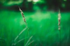 Simplicidade da natureza Foto de Stock