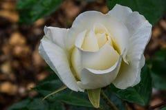Simplicité blanche image stock