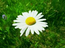 Simplicité naturelle Photo libre de droits
