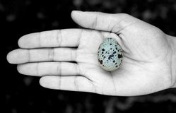 Simplicity. A quail's egg into a girl's palm Royalty Free Stock Photo