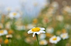 Simplicity made flower. Royalty Free Stock Images