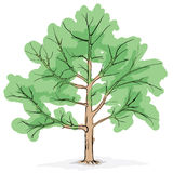 Simplified image - crone of tree Royalty Free Stock Images