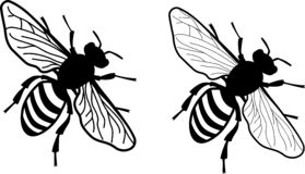 Simplified realistic honey bee - monochrome - two versions of wing delicacy stock illustration