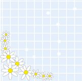 Simplistic Daisy background Stock Images