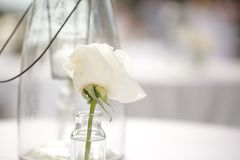 Simplistic White Flower Decor/Wedding or Event Details. Simplistic flower detail for wedding or event tables: Simplicity is trending with weddings and events Royalty Free Stock Photography