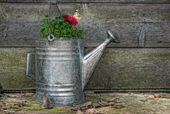 Simply Country. Watering can filled with geraniums and a butterly on a blossom. Image done in HDR royalty free illustration
