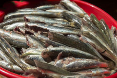 Simply food ,simply cooking -  anchovies Stock Images