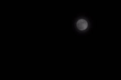Simply Moon. Genuine dark night sky with vivid moon.  Simple but is a versatile background having no horizon or stars.  Leaves designer free to fill the sky as Stock Photo