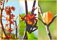 Simply nature collage Stock Photography