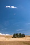 Simply Tuscany. Group of cypresses on the top of a rolling hill Stock Images