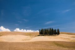 Simply Tuscany. Group of cypresses on the top of a rolling hill Royalty Free Stock Photo