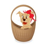 Simpotichny puppy in a basket Royalty Free Stock Images