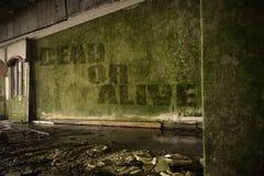 Simsen Sie Tote oder lebendig auf der schmutzigen Wand in einem verlassenen ruinierten Haus Stockbild