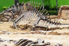 Simulação da exposição do dinossauro no parque público fotografia de stock royalty free