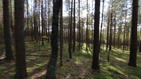 Simulazione di funzionamento spaventato di fuga nel colpo profondo della foresta POV archivi video