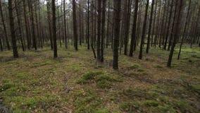 Simulazione di funzionamento spaventato di fuga nel colpo profondo della foresta POV stock footage