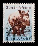 Simum de Ceratotherium de rhinocéros blanc, faune sud-africaine, serie de parc de Kruger, vers 1959 photo stock