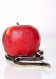 Sin. A snake over an apple Stock Image