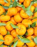 Sinaasappel. Stock Foto