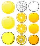 Sinaasappel & grapefruit royalty-vrije illustratie