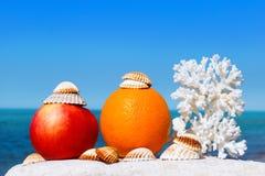 Sinaasappel, appel, koraal en shells op een achtergrond van de zomeroverzees Stock Foto's