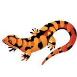 Sinaasappel bevlekte die Salamander op een witte achtergrond wordt geïsoleerd Illustratie van het beeldverhaal de vectorclose-up stock illustratie