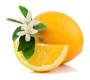 Sinaasappel, bloem en plak. Royalty-vrije Stock Foto