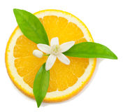 Sinaasappel, bloem en plak. Royalty-vrije Stock Afbeelding