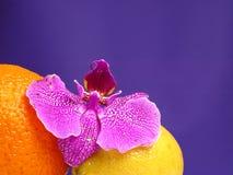 Sinaasappel, citroen en roze orchidee Royalty-vrije Stock Afbeelding