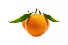 Sinaasappel drie   Stock Afbeeldingen