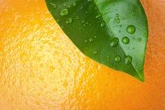 Sinaasappel en blad stock foto