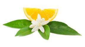 Sinaasappel en bloem Royalty-vrije Stock Foto