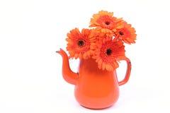 Sinaasappel gerber Royalty-vrije Stock Fotografie