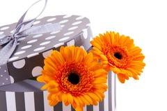 Sinaasappel gerber in een giftbox Stock Afbeelding