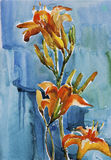Sinaasappel lillies op blauwe waterverf als achtergrond vector illustratie