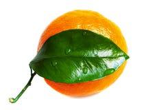 Sinaasappel met dalingen van water Stock Foto