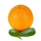 Sinaasappel met twee groene bladeren Stock Foto's