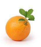 Sinaasappel op witte achtergrond Royalty-vrije Stock Foto