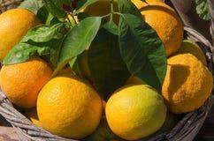 Sinaasappelen in de mand Stock Afbeelding