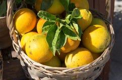 Sinaasappelen in de mand Stock Foto