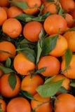 Sinaasappelen en bladeren Stock Afbeelding
