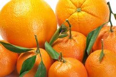 Sinaasappelen en mandarijnen Stock Afbeelding