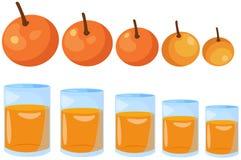 Sinaasappelen groot tot klein Royalty-vrije Stock Afbeeldingen