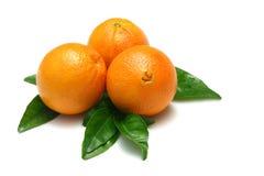 Sinaasappelen I Royalty-vrije Stock Afbeeldingen